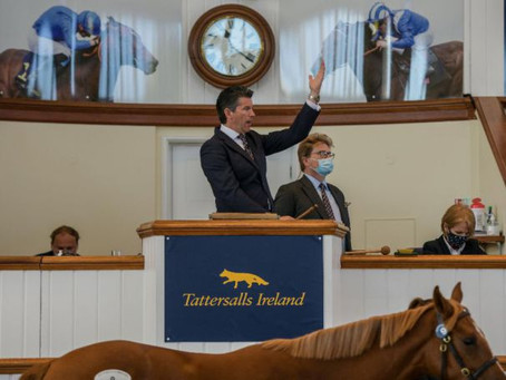 Tattersalls Ireland announce revised plans for the Tattersalls Ireland Goresbridge Breeze Up Sale