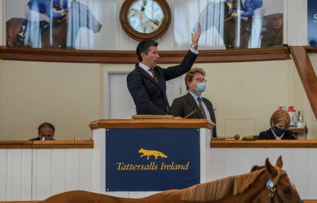 Tattersalls Ireland announce revised plans for the Tattersalls Ireland Goresbridge Breeze Up Sale