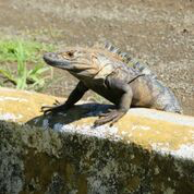 Sun worshipper at Hotel Santa Catalina