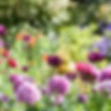 types-of-flowers-1520214627.jpg