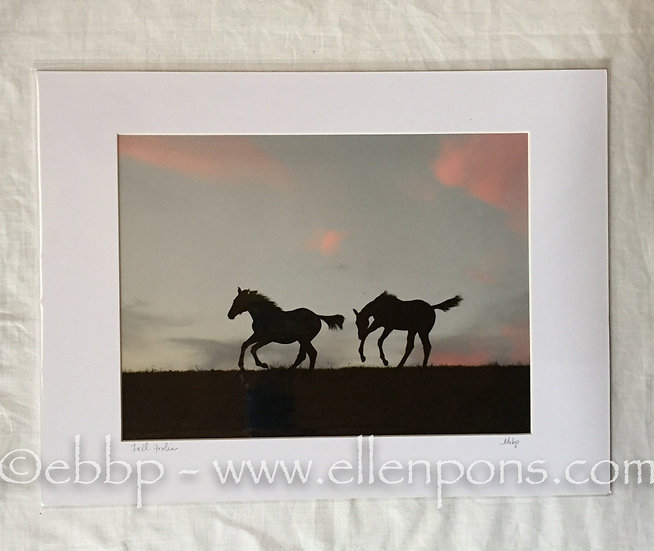 Medium Matted Two Foals Chase #1 Print