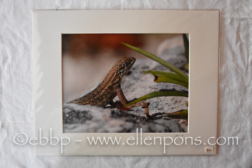 Medium Matted Print. Gecko - Hopetown BHS print