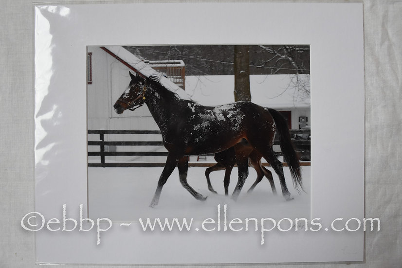 Matted Print. Snow Covered mare  - print