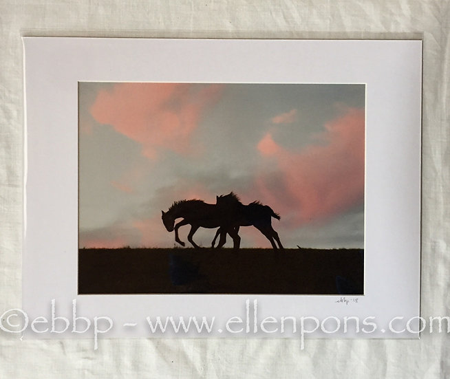 Medium Matted Print. Two Foal Chase #2 print