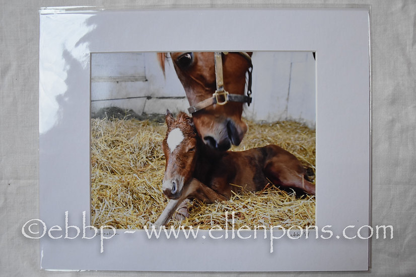 Matted Print. First Foal reaction  - print