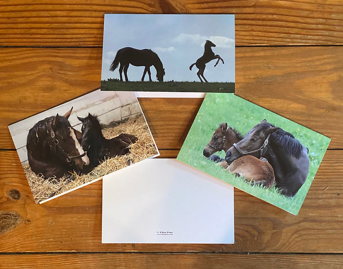 3 Equine Note Cards