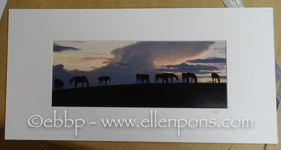 "Panoramic Prints ""All Grazing"" 2019 CLF Evening"