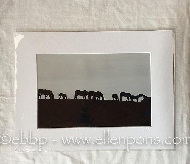 Medium Matted Print.  Silhouette Grazers print