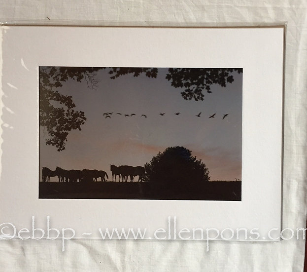 Medium Matted Print. Geese Fly over horses print