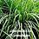 Thumbnail: Lemongrass Renata Exfoliation Treatment
