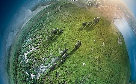 [Test DVD/Blu-Ray] L'édition DVD de Planète Animale 1 & 2