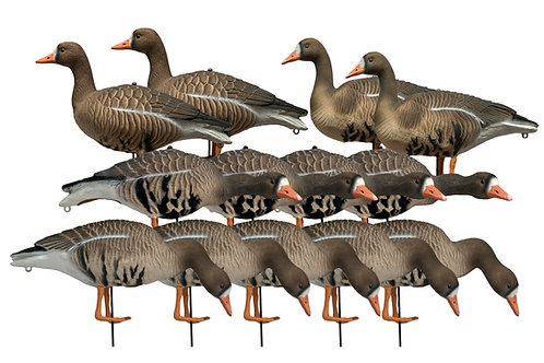 Specklebelly  Geese Per 13