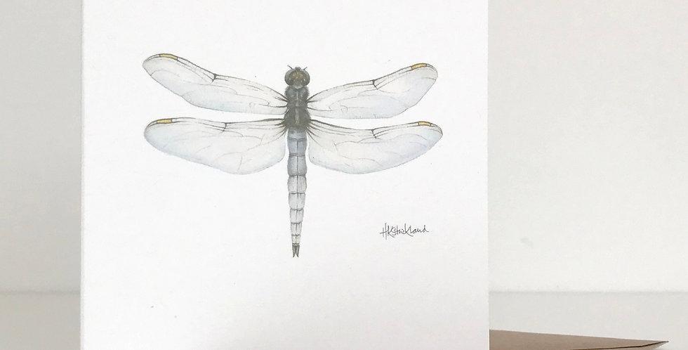 Keeled Skimmer Dragonfly card