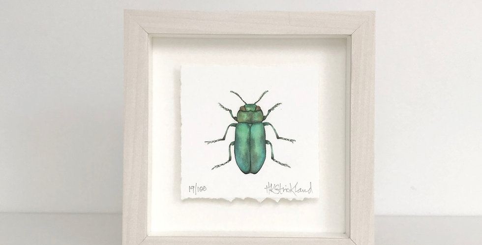 Jewel Beetle framed print (available unframed)