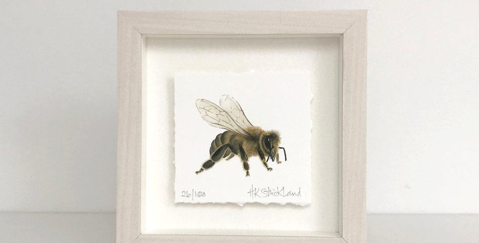 Honey Bee framed print (available unframed)