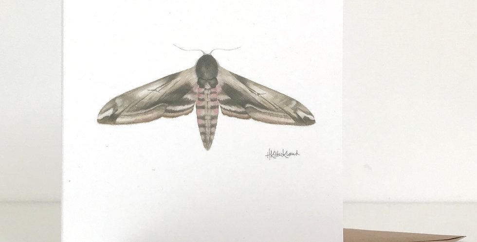 Privet Hawk Moth card