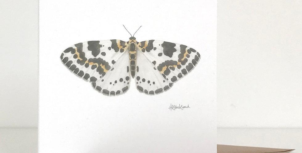 Magpie Moth card