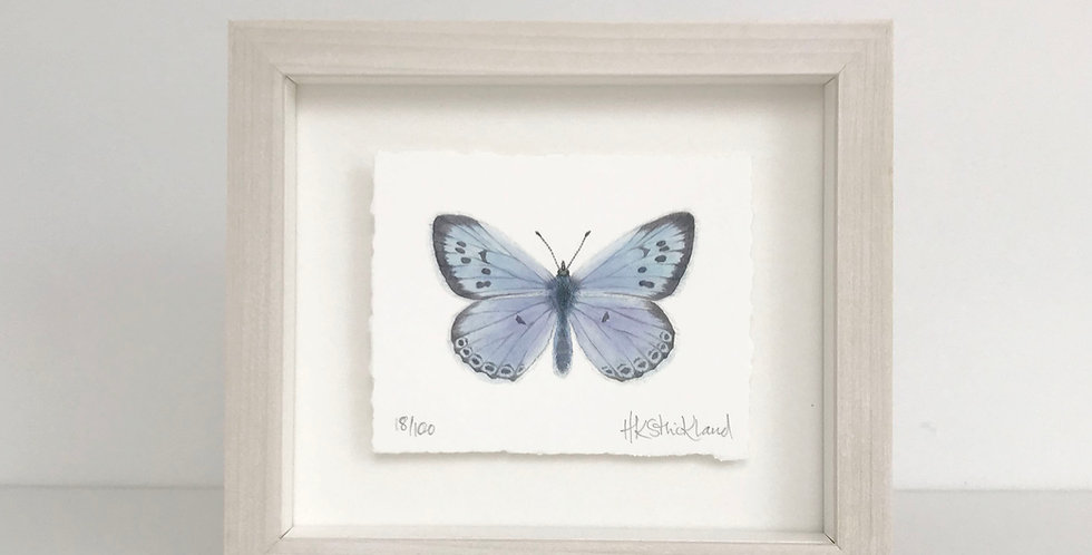 Large Blue Butterfly framed print (available unframed)