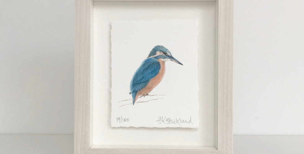 Kingfisher framed print (available unframed)