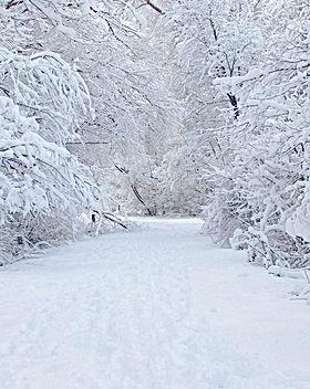 Sneeuw-in-de-Ardennen.jpg