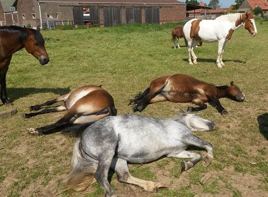 Les poneys profite du bon temps