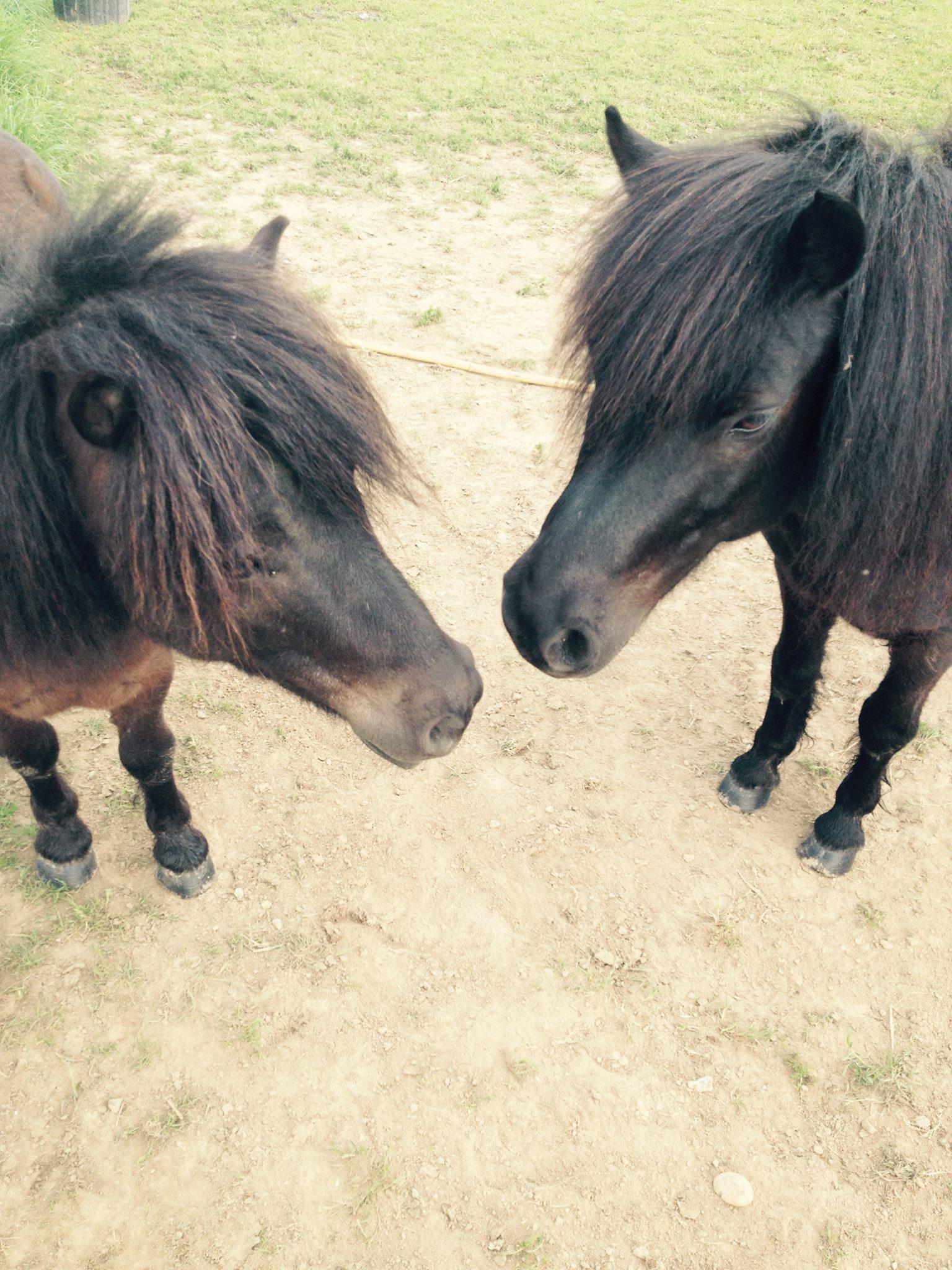 Blacky et Oliver