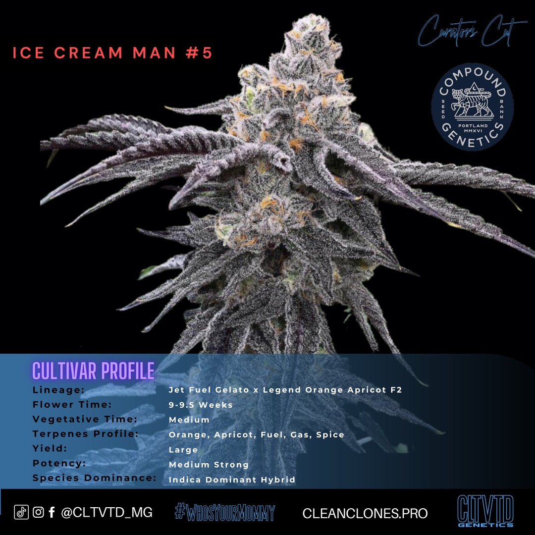 Ice Cream Man #5_cultivar profile