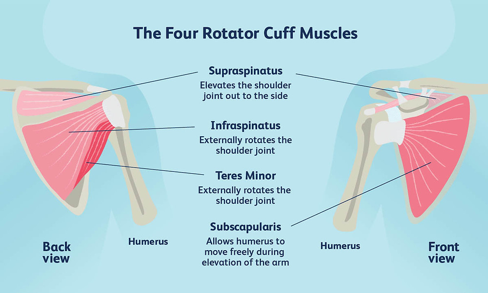 Rotator cuff tendinitis, supraspinatus tear, normal muscle function