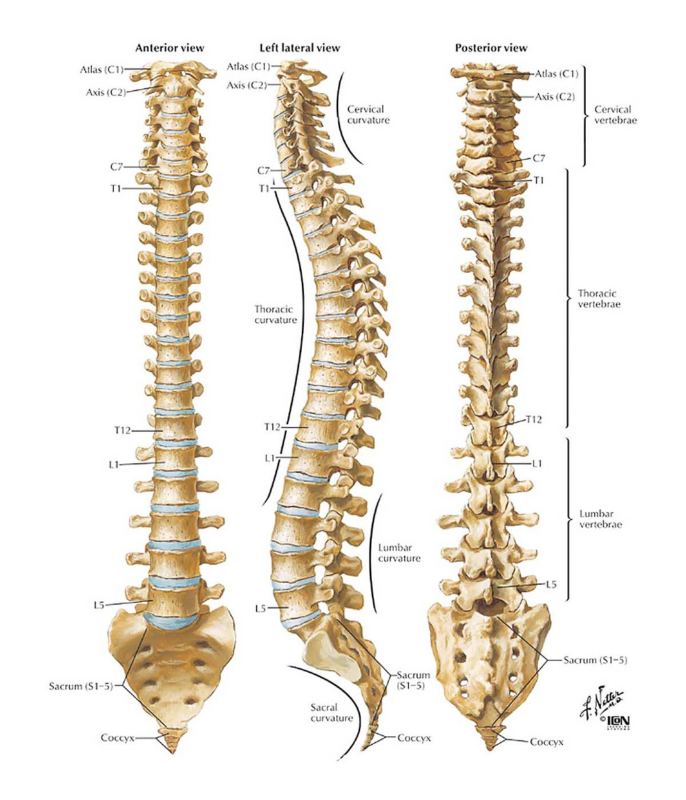 Spine structure and alignment