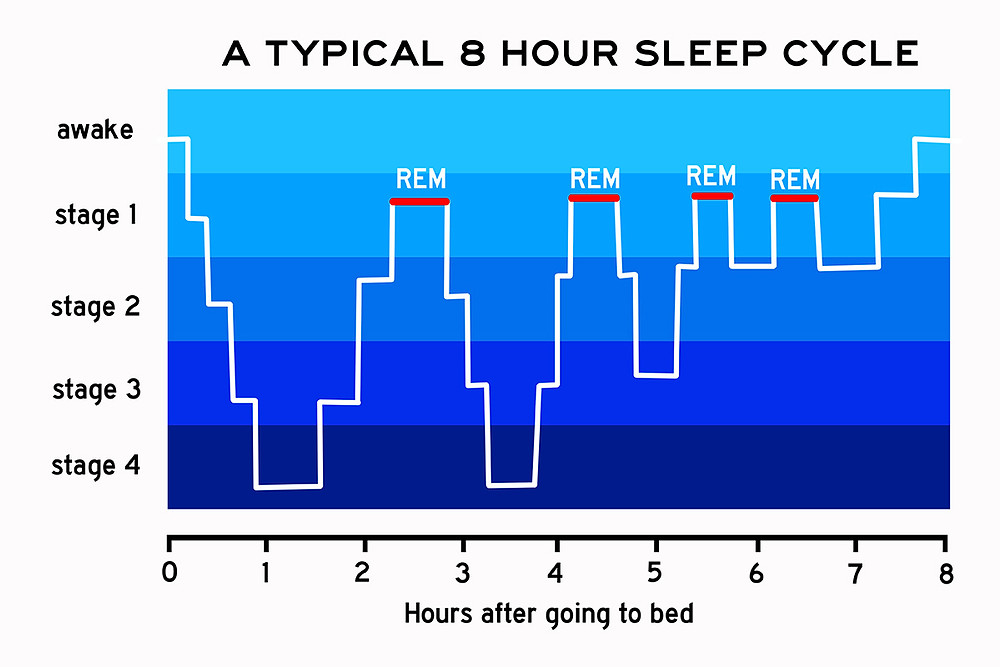 REM sleep cycle graph