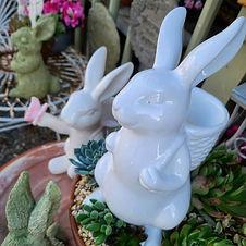 J Woeste bunnies.jpeg