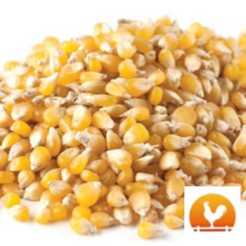 Amish Country® Ladyfinger Popcorn, 2 Lb