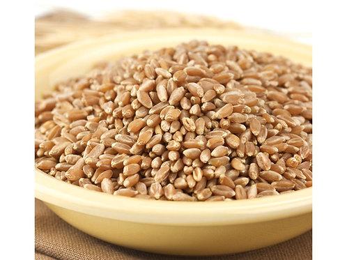 Non-GMO Bronze Chief Wheat Kernels 4 lbs.