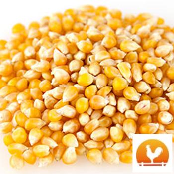 Amish Country® Baby Yellow Popcorn, 2 Lb