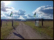 Bison Ranch Tour Springdale WA