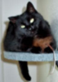 Fur Cat Toys
