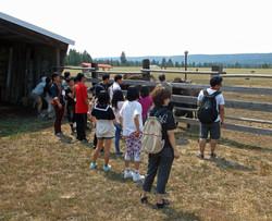 Meeting the herd