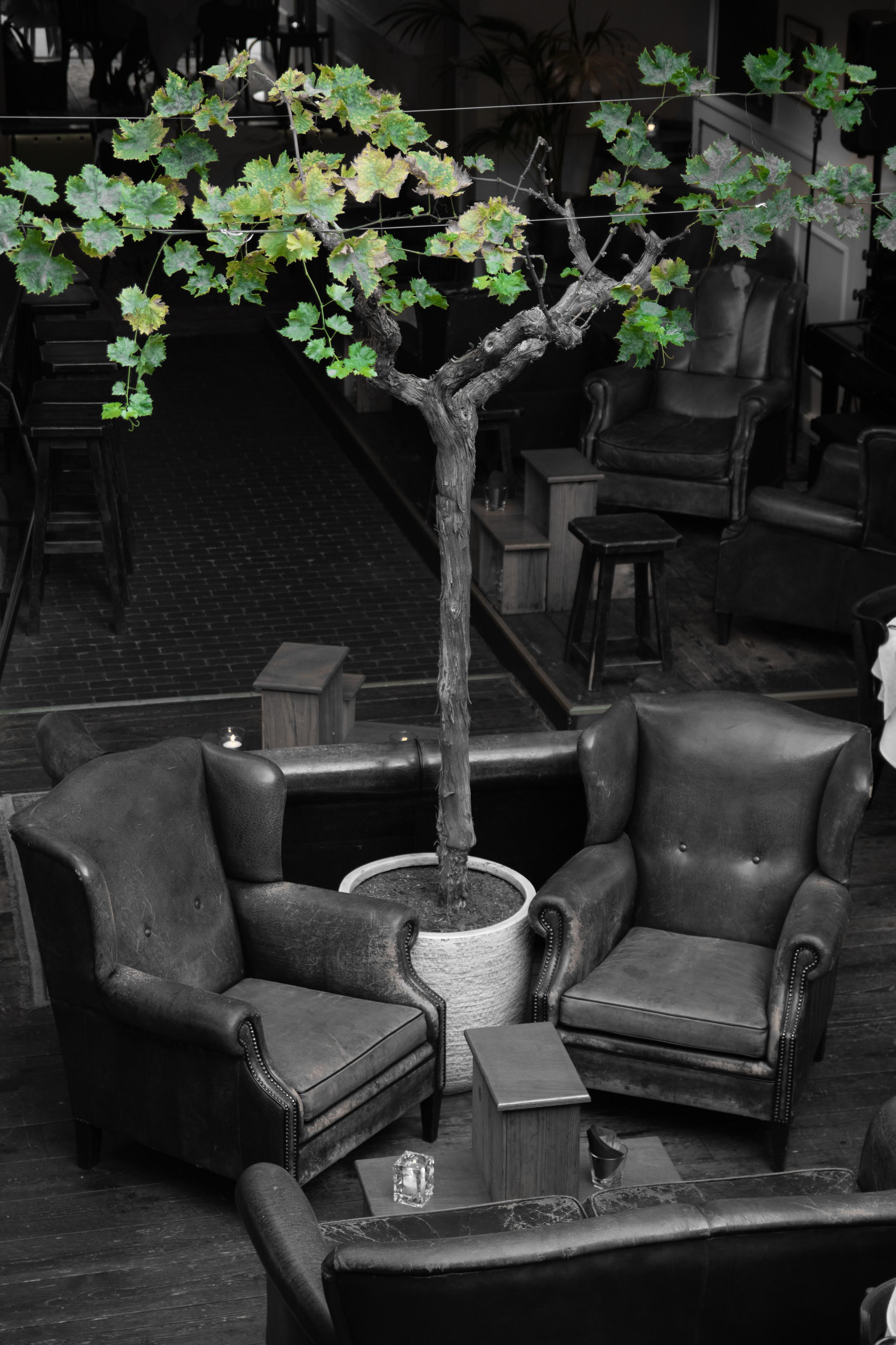 Olive Tree Lounge