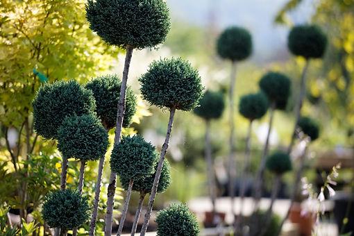 Gartendeko und Pflanzenraritäten