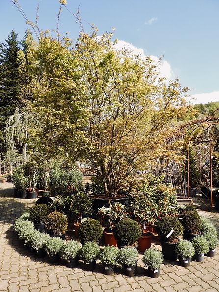 Gartencenter Matzer Outdoor