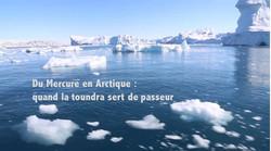 Du Mercure en Arctique
