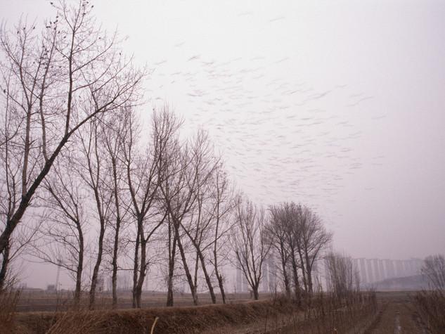 Shaanxi 2003