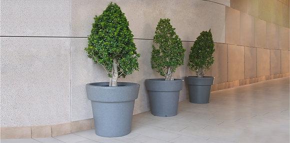 Elosia - Planter Collection