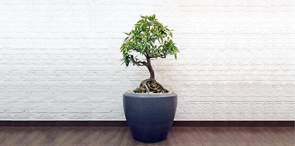 Piatto - Planter Collection
