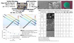 Figure2_Denitrification.jpg