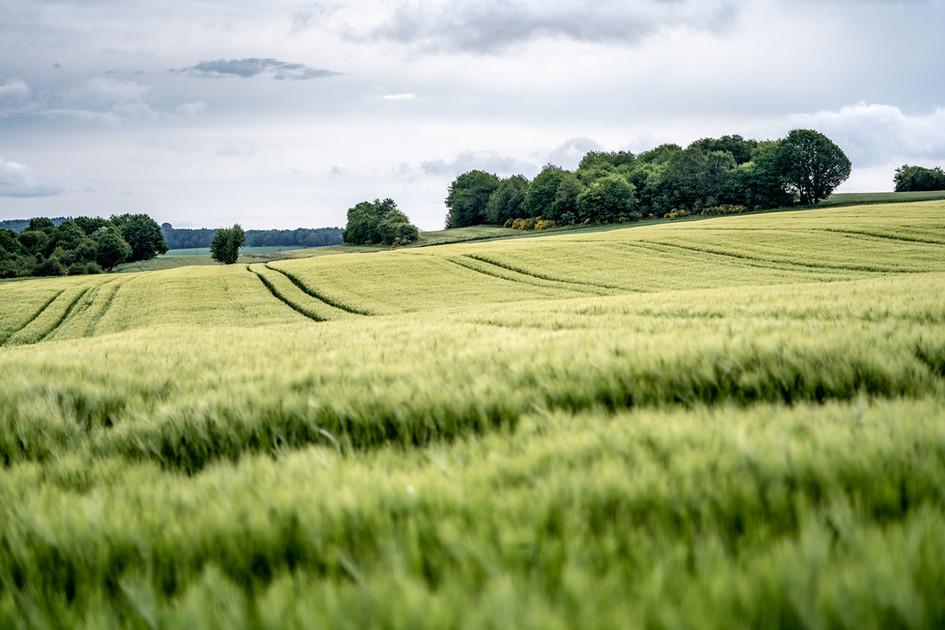 Felder und Wiesen