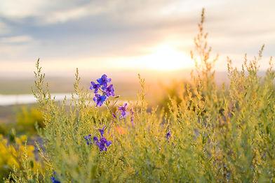 Flower landscape_Olga Filonenko_Unsplash