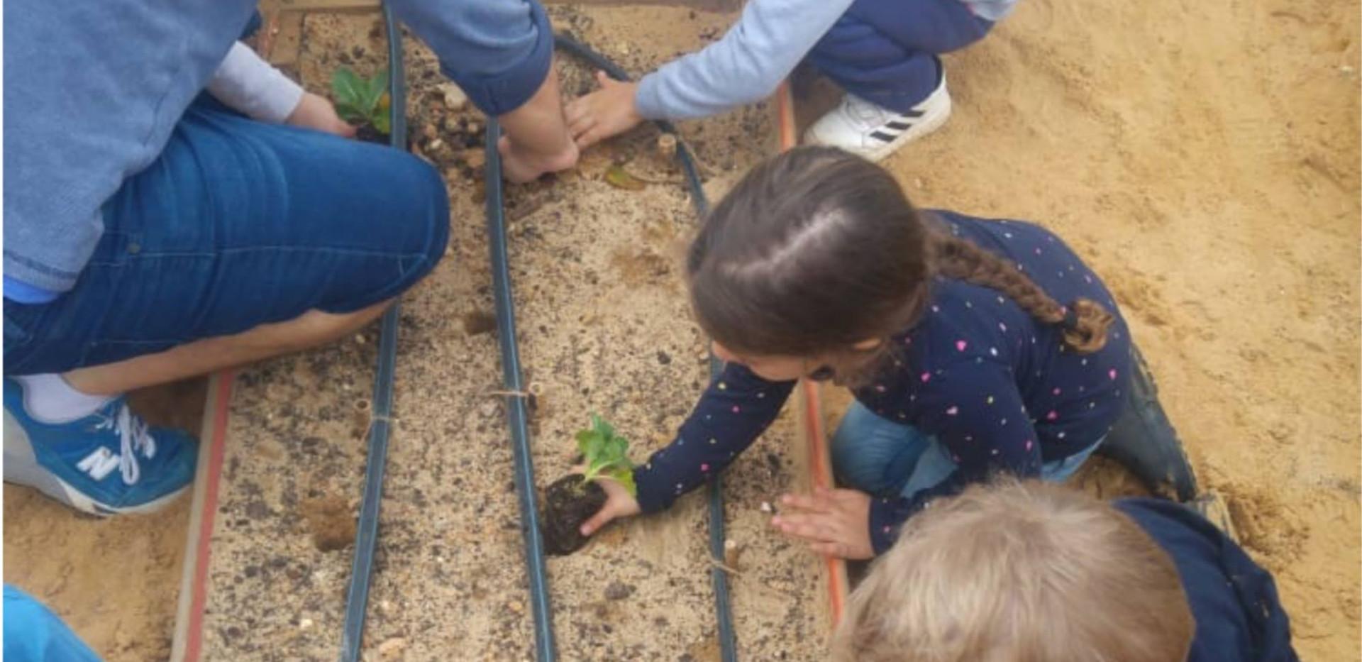 שותלים בגינת הירק בגן בראשית