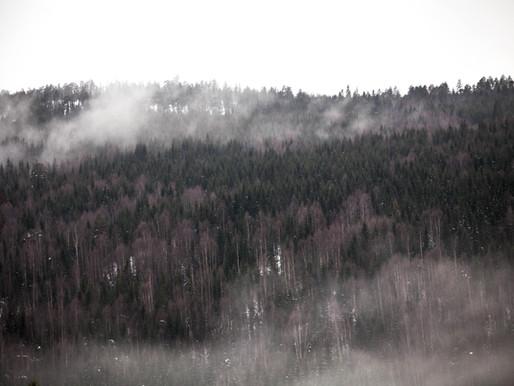 Échappée sauvage en Suède