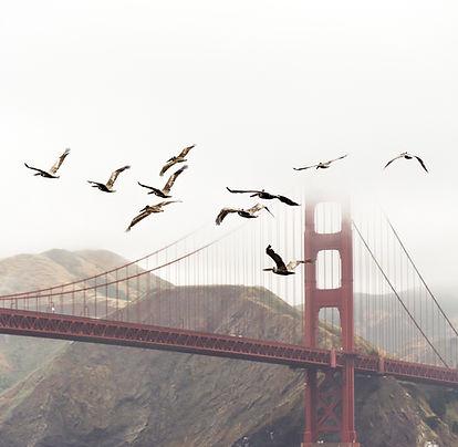 birds-1850169.jpg